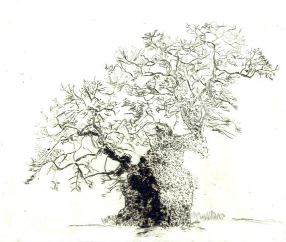 Baum; Radierung